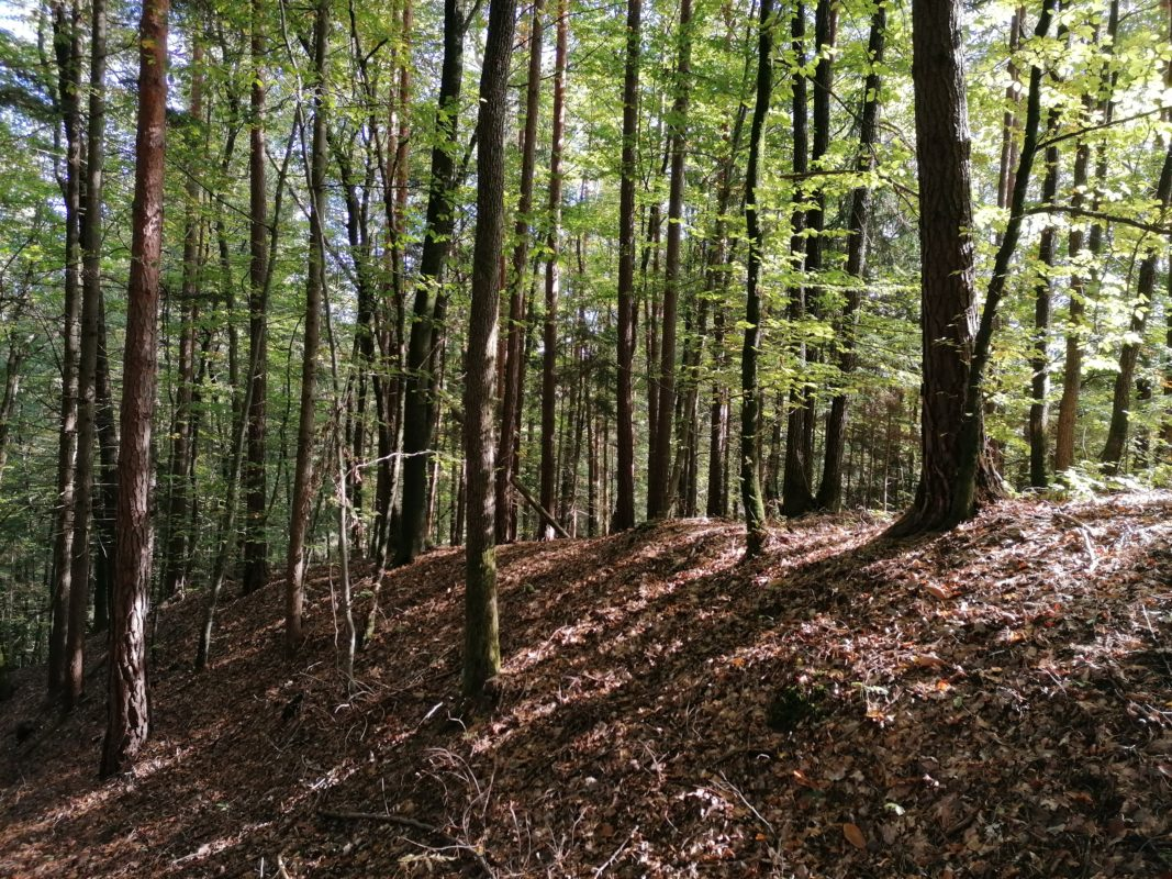 Herbstcup Mantscha Mitterriegel