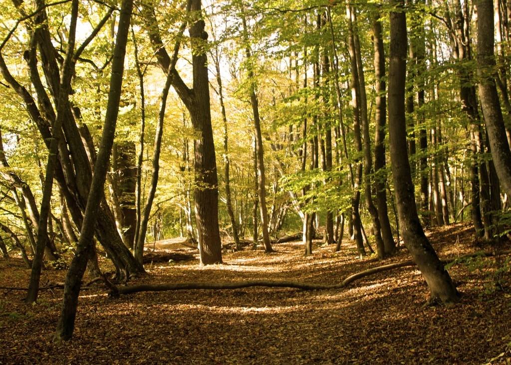 Dreimarkstein Wald